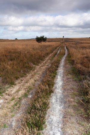 Pad over de Rheder en Worthrederheide  in nationaal Par de Veluwezoom.