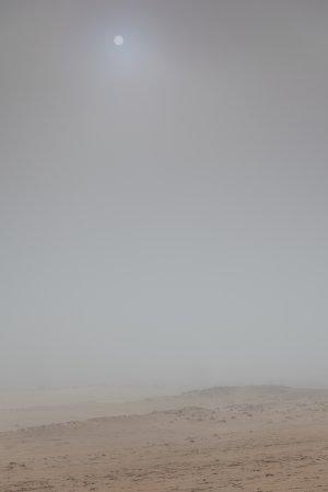 Minimalistisch landschap op de Hoge Veluwe.