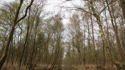 Bos in de Weerribben, deel van Nationaal park Weerribben-de Wieden.