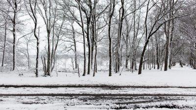 Horizontale en verticale lijnen van bomen en sporen in de sneeuw bij Havelte in Drenthe.