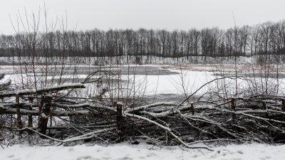 Snoeihout met sneeuw langs een bevroren plas in het Holtingerveld bij Havelte in drenthe.