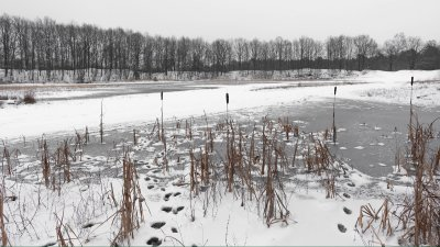 Bevroren plas met riet in het Holtingerveld bij Havelte in Drenthe.