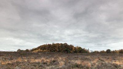 Bosje op herfstdag in het Holtingerveld bij Havelte in Drenthe.