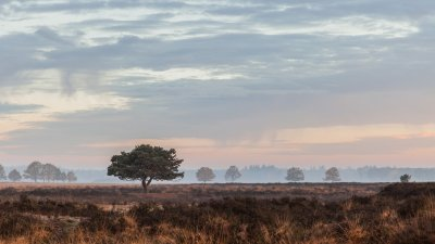 Vroeg herfstochtend in Nationaal Park het Dwingelderveld bij Dwingeloo in Drenthe.