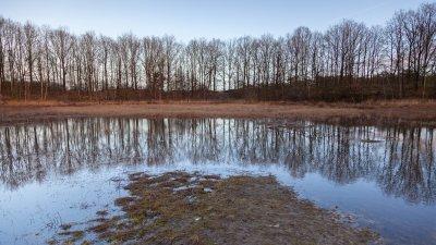 Bomen weerspiegeld in het water in het Holtingerveld bij Havelte in Drenthe.