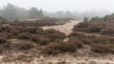 Nevelige dag op het Holtingerzand bij Havelte in Drenthe.