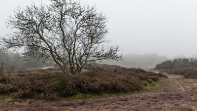 Grijze dag op het Holtingerzand bij Havelte in Drenthe.