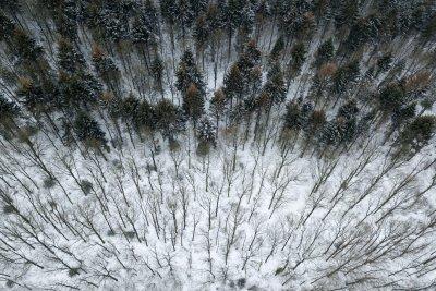 Dronefoto van winters loof- en naaldbos bij Havelte in Drenthe.
