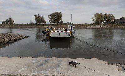 Veerpont  met hond over de IJssel bij Bronckhorst in Overijssel.