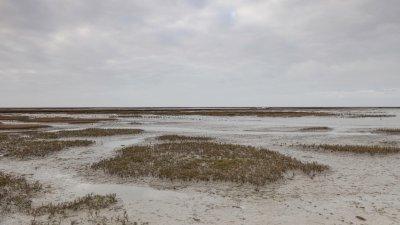 Het Uithuizer Wad in het Noorden van Groningen bij laagwater.