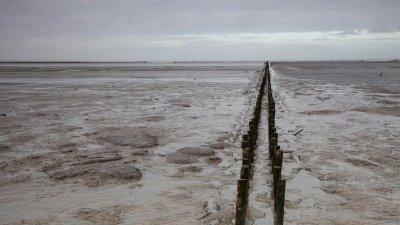 Rijsdam op het drooggevallen Uithuizer Wad in het Noorden van Groningen.