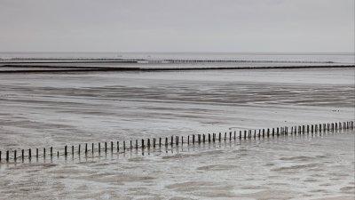 Rijsdammen op Uithuizer Wad in Noord-Groningen bij laagwater.
