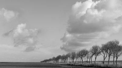 Bomenrij langs Oude Zeedijk in de Noordpolder in Noord-Groningen.