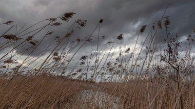 Donkere buienwolken boven de Wieden in de kop van Overijssel.