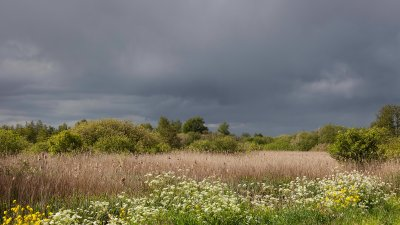 Donkere wolken boven de Wieden in de lente met bloeiend fluitekruid en koolzaad.