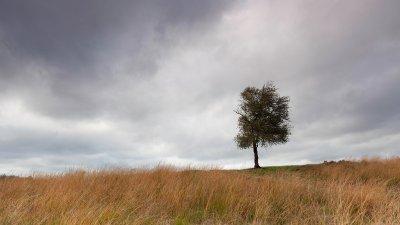 Eenzaam boompje op de Worthrhederheide in Nationaal Park de Veluwezoom.