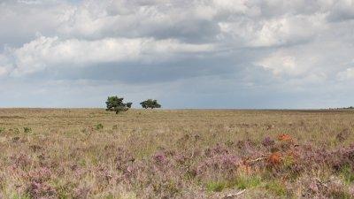Een augustusdag op de Terletse heide in Nationaal Park de Veluwezoom.