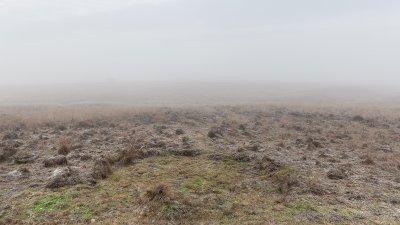 Nevel op de Terletse heide op een ochtend in de winter.