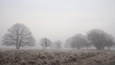 Bomen op een nevelige winterochtend op de Terletse heide op de Veluwe.