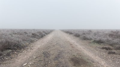 Een pad op een nevelige winterochtend op de Terletse heide op de Veluwe.