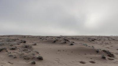 Schaarse begroeiïng op zandverstuiving de Pollen in Nationaal Park de Hoge Veluwe.