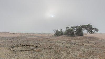 De zon breekt door de mist boven zandverstuiving de Pollen op de Hoge Veluwe.