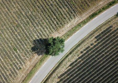 Drone foto van een weg tussen lavendel velden bij Sault in de provence in Frankrijk.