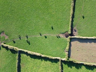 Weiden met stenen muurtjes en paarden in Cornwall in het Verenigd Koninkrijk.